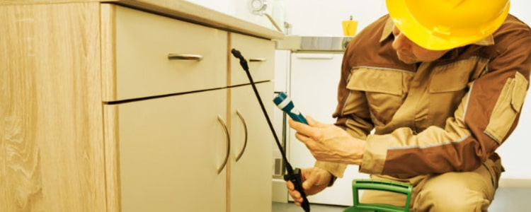 Best Pest Control Ballarat